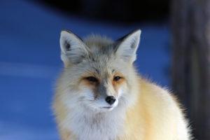 Lola Harkins wildlife photographer