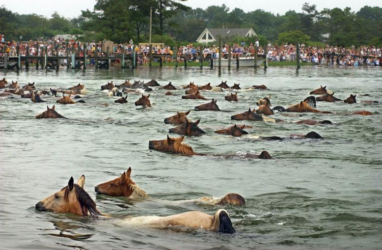 Chincoteague Pony Swim & St. Michaels, MD